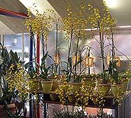 Orchideenwochen